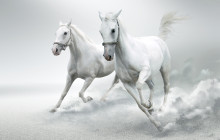 White Horses in faux background